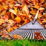 """Проект """"Чисте повітря – здорові легені"""" допоможе прибрати листя"""