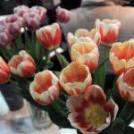 Перший тиждень квітня: очікувати тепла чи похолодання?