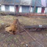 За два дні в Ірпені повалено понад 50 дерев, – Ірпіньзеленбуд