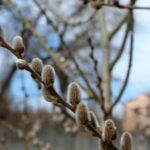 Погода: в Ірпені суттєво потепліє в кінці тижня
