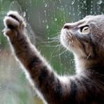 Прогноз погоди: цього тижня в Ірпені дощитиме